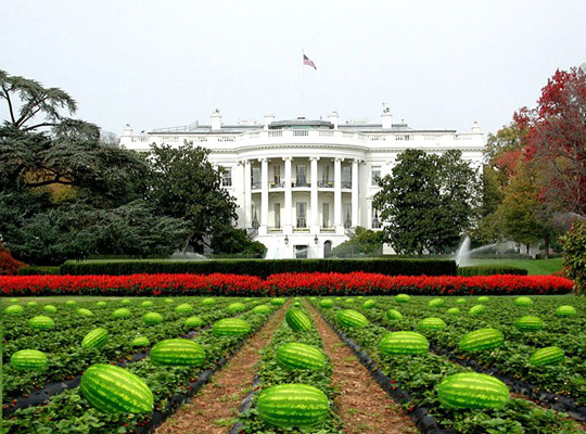 watermelon white house Moronic Mayor Resigns