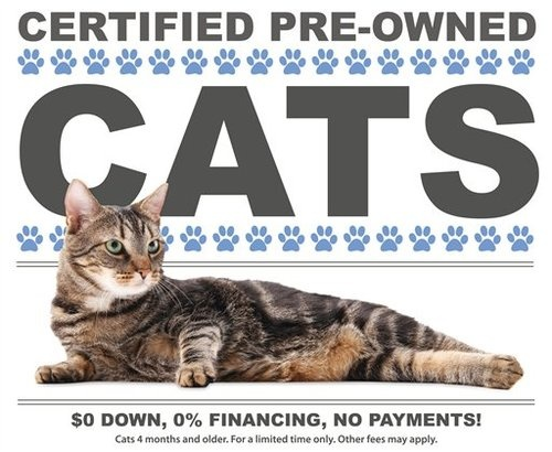 500x pre owned cats Certified Pre Owned Cats: Inspected, Detailed, Better Than New!
