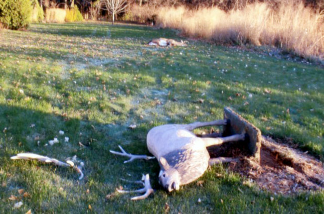 20091110  9c06aca0 cdbc 11de a417 001cc4c002e0.image Deer loses head butt with Wisconsin lawn ornament