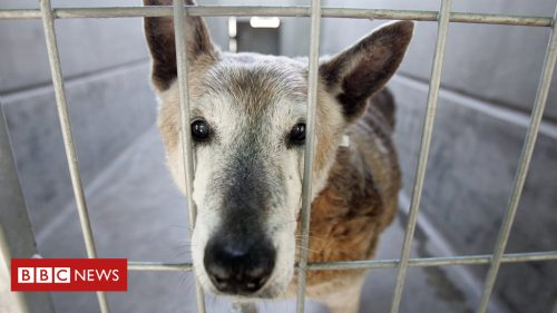 104991131 gettyimages 563991971 500x281 California pet shops to sell only rescues