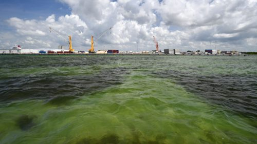 4fa2c46b d2fb 4e85 9ca8 782659e9eedc FLSAR 040121 S PINEY POINT 002 500x281 Florida crews are pumping wastewater into Tampa Bay to avoid a full reservoir breach: What we know